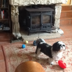 Sonny in Sea Dog Cottage